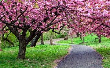 дорога, деревья, природа, лес, фото, парк, тропинка, путь