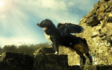 свет, камни, крылья
