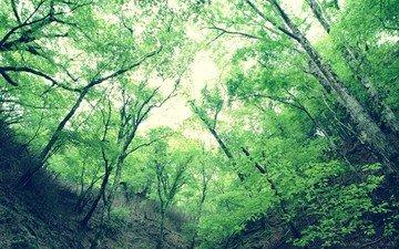 деревья, листья, зелёный, ущелье