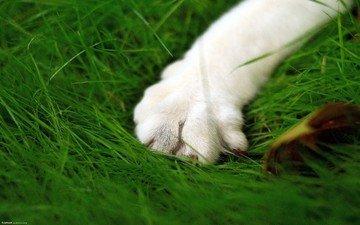 зелень, кошка, лапа, макросьемка