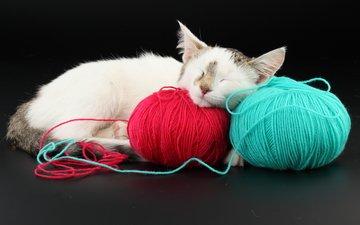 кот, красный, голубой, клубки