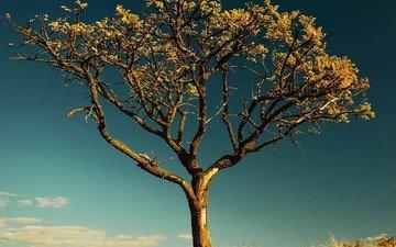 небо, дерево, листья