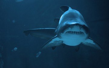 хищник, глубина, акула