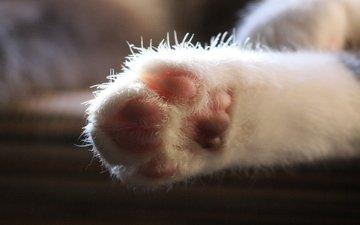 кот, кошка, лапа