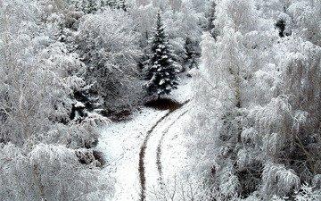 дорога, деревья, снег, обои, зима, winer, деревь, на природе, автодорога