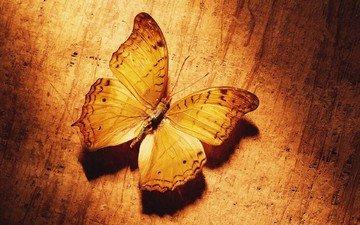 желтый, бабочка
