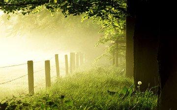 трава, деревья, лес, утро, туман, забор, одуванчик, газон