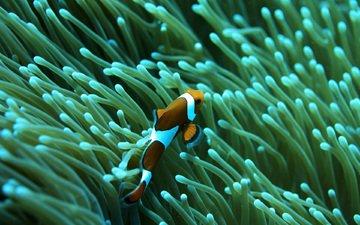 море, рыба, риф