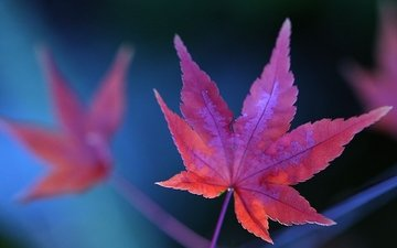 фотосинтез, конопля, листки