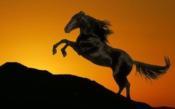лошадь, закат, гора, черный, конь, грива, хвост, жеребец