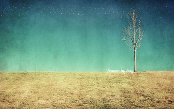 tree, texture, field