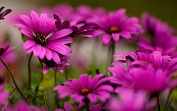 цветы, макро фото, красота, хорошее качество