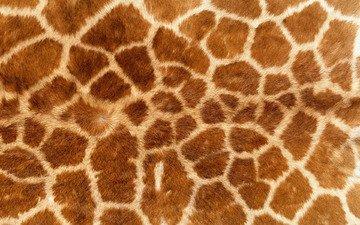 обои, текстура, фон, кошка, леопард, шкура, жираф, мех