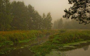 лес, болото, туман