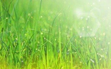 зелень, макро, лучи, роса, капли, свежесть, травка, солнца
