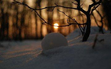 снег, обои, зимний лес