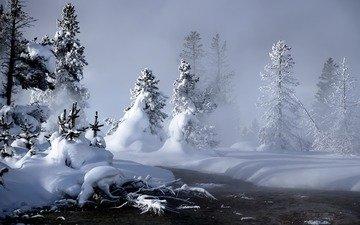 снег, зима, елки, сугробы