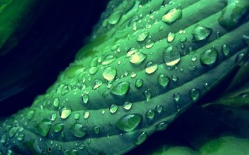 роса, капли, растение
