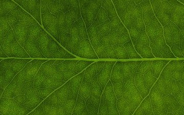 зелёный, лист
