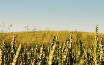 небо, природа, фото, поле, пейзажи, колосья