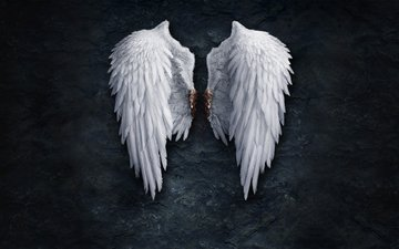 кровь, стена, крылья, перья