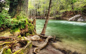 дерево, лес, речка, коряга