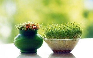 grass, pot, agdi