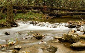 деревья, вода, обои, течение, бревна, горная река