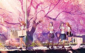 лепестки, розовые, сакура, японии, cherry blossom, цветущая, школьницы