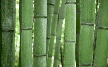 зелёный, бамбук