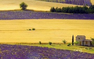 поле, дом, фиолеовый