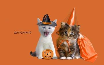 животные, котенок, котята, оранжевый фон