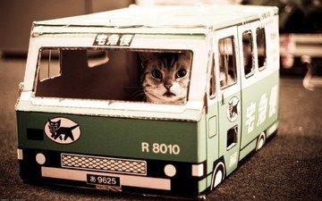nekobasu, кошачий автобус, котик