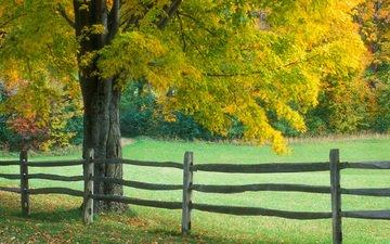 дерево, осень, забор