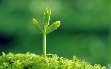 трава, природа, зелень, зелёный, макро, росток