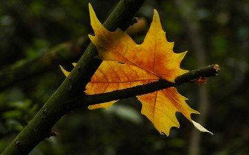 лист, символ, осен