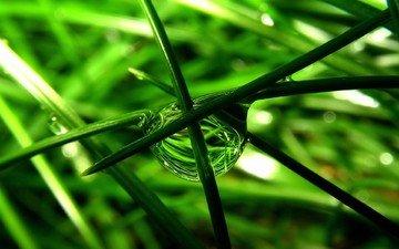 трава, макро, капля