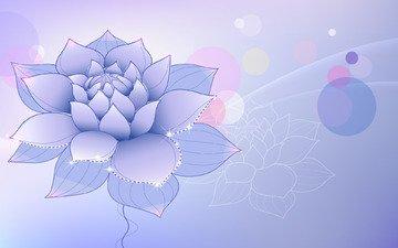 цветок, сиреневый, лотус