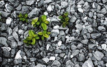 камни, листья, борьба, растение, выживание