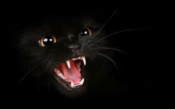 кот, усы, клыки, оскал, злой, котяра, шипит, злое усатое животное