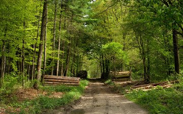 дорога, лес, бревна