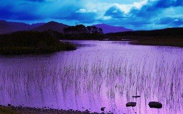 lake, shore, color