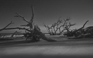 ночь, деревья, вечер, берег, песок, пляж, темнота, бревна