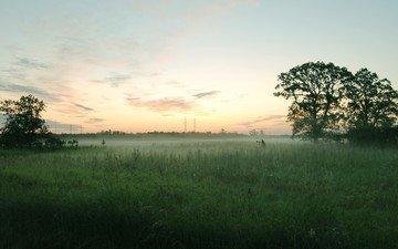 деревья, туман, поле