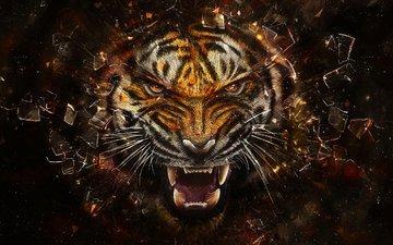 тигр, осколки, стекло