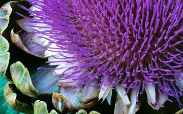цветок, растение, windows 7, семерка