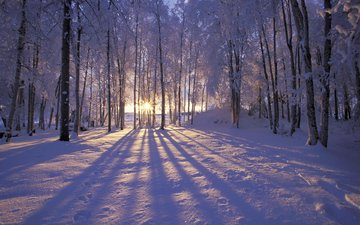 the sun, snow, forest, winter, frost, trees. rays