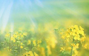 цветы, природа, желтый, макро, фото