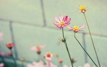цветы, природа, обои, макро фото, красота, нежность