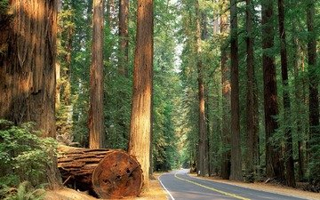 дорога, деревья, природа, обои, лес, nature wallpapers, деревь, автодорога